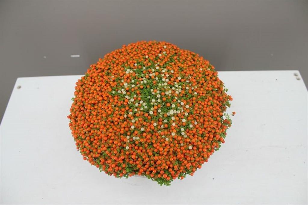 Neterra Astrid Bowl