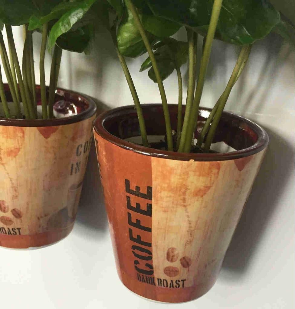 coffee plant for the fridge