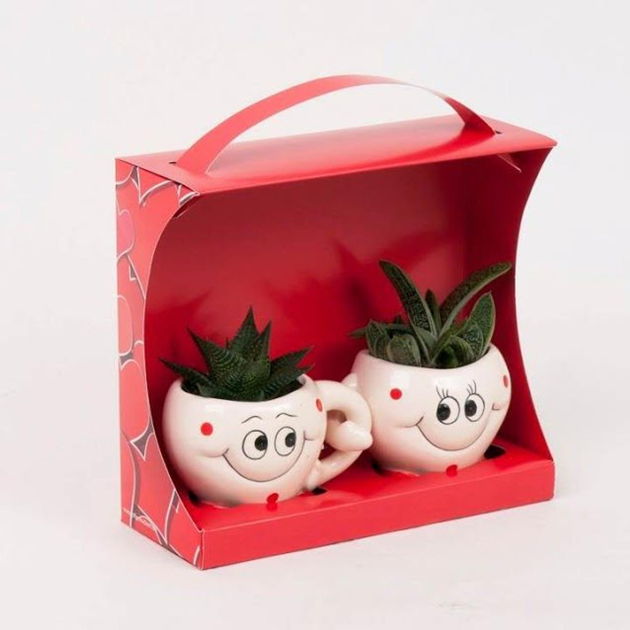Happy Couple Succulents
