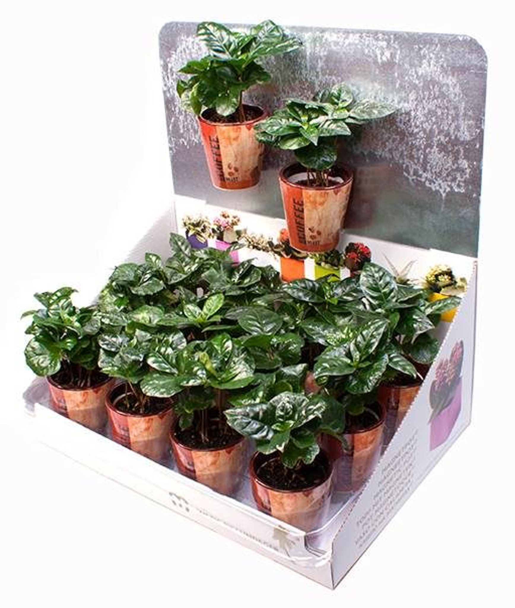 magnetic coffee plant