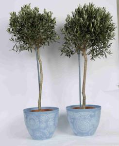 Pale Blue Floral Pot with Olives