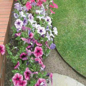 edging for flower bed