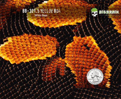 Yellow Boa Snake Snakeskin Animal Print 50 CM Hydrographics Film SIlver Base Quarter Reference