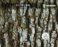 Tree Bark Realistic Camo Camoflauge Hydrographics Film Pattern Big Brain Graphics White Base Quarter Reference