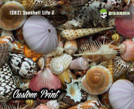 Seashell Life Abstract Abstraction Beach Life Sea (SH2) Big Brain Graphics Custom Printed Film Hydrographics Film Supplier