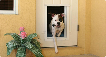 Dog Doors Are Great For Giving You And Your Dog The Freedom And Convenience  You Both Deserve!