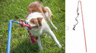 Outdoor Interactive Dog Tug Toy-Medium Original