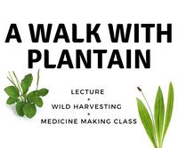 Plantain Herb Walk & Workshop
