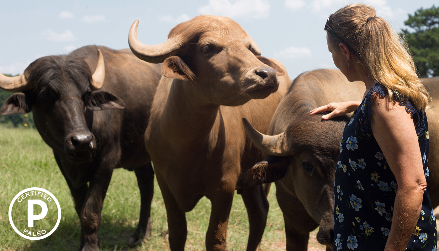 Image result for brown buffalo