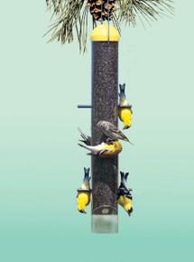 Upside Down (Anti-House Finch Feeder)