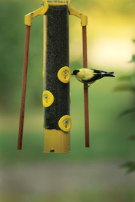 18 inch Finch Feeder with Dowels (Yellow)
