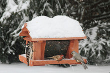14 inch Seed and Suet Feeder