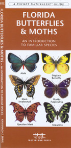 Florida Butterflies and Moths