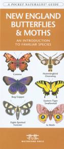 New England Butterflies and Moths