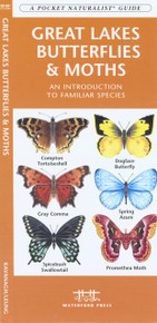 Great Lakes Butterflies and Moths
