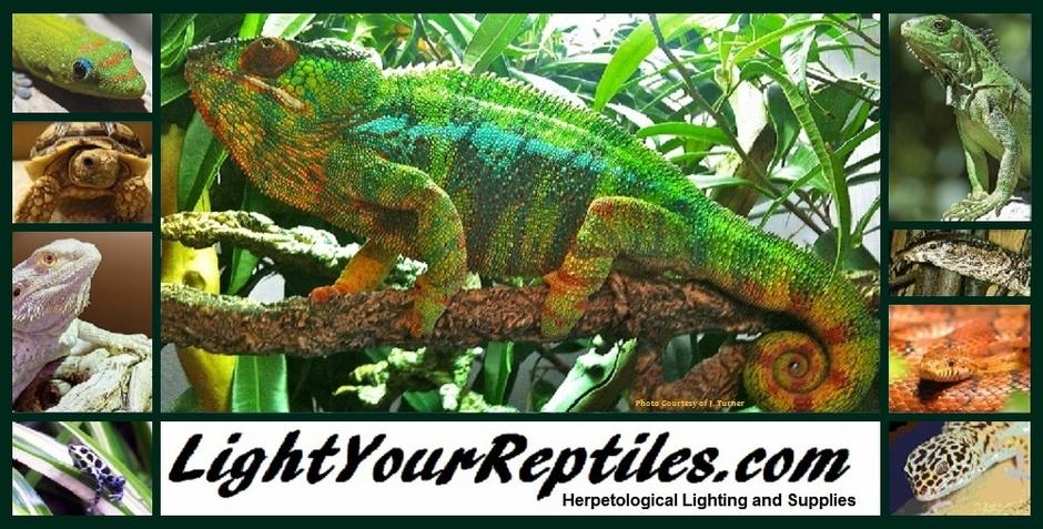 Arcadia Uv Lighting Reptile Light Fixtures Jungle Dawn