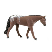 Safari Winner's Circle Appaloosa Mare