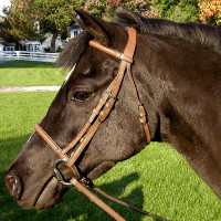 Exselle Limited Plain Raised Bridle