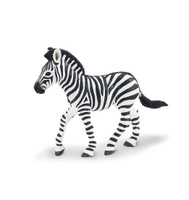 Wild Safari Plains Zebra Foal