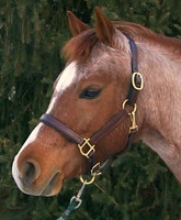 Pro-Trainer Padded Leather Halter