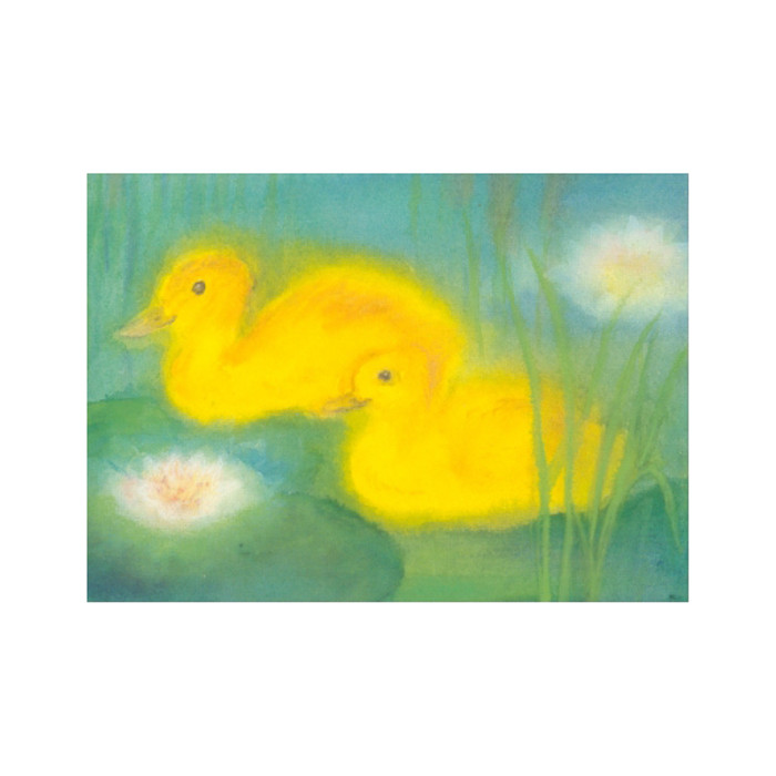 Two Ducks in a Pond postcard