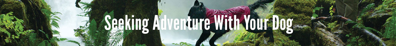 Seeking adventure with your dog