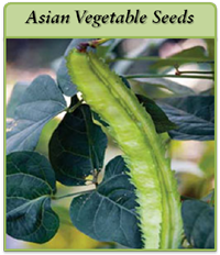 asian-vegetable-seeds-logo.png