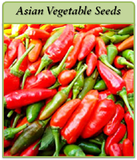 asian-vegetable-seeds-logo2.png
