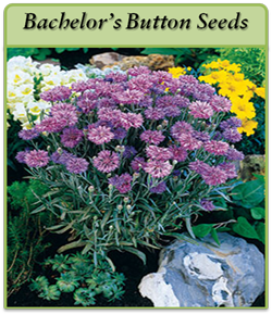 bachelor-s-button-seeds-log.png