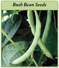 bush-bean-seeds-logo.png
