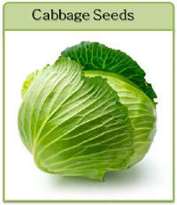 Cabbage Seeds