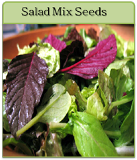 Salad Mix Seeds