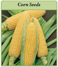 corn-seeds-logo.png