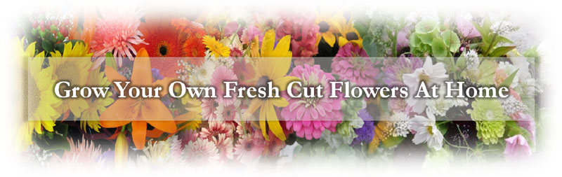 cut-flower-header.jpg