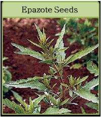 Epazote Seeds