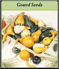 gourd-seeds-logo.png
