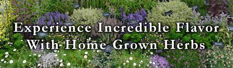 herb-garden.jpg