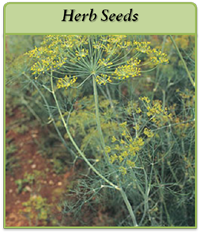 herb-seeds-logo.png