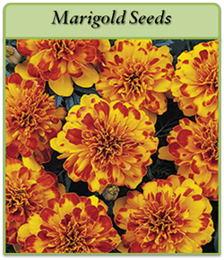 marigold-seeds.png