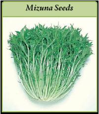 mizuna-seeds-logo.png