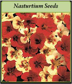 nasturtium-seeds.png