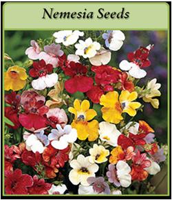 nemesia-seeds.png