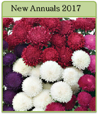 New Annuals For 2017