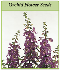 orchid-flower-seeds-logo.png