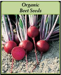 organic-beet-seeds-logo.png