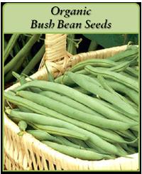 organic-bush-bean-seeds-logo.png