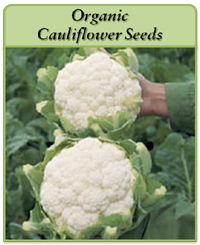 organic-cauliflower-seeds-logo.png