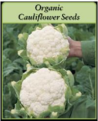 organic-cauliflower-seeds-logo.png