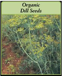 Organic Dill Seeds