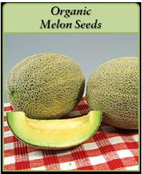 organic-melon-seeds-logo.png